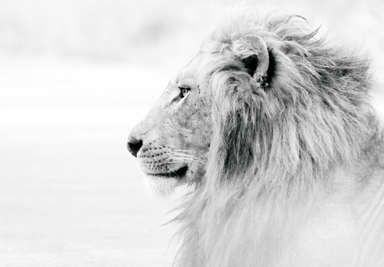 Царят