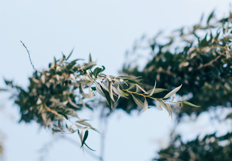 Цветница - страдание и възторг